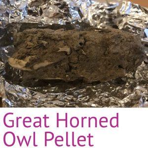 Great Horned Owl Pellet