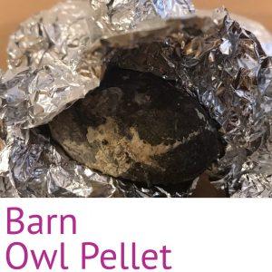 Barn Owl Pellet